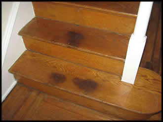 cat home for household floors pee stains and from clothes removal blog removing surfaces fix com pet your stain floor hardwood